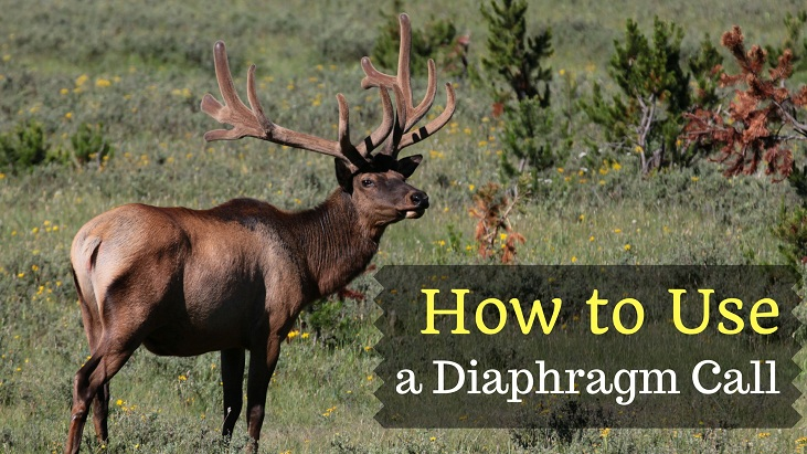 How to Use a Diaphragm Call