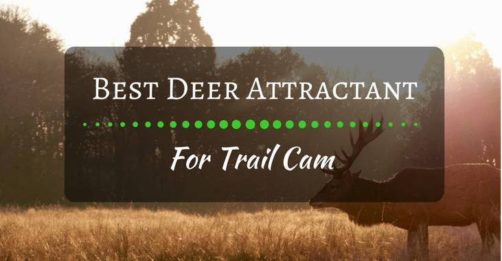 Best deer attractant for trail cam