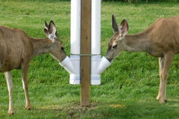 How to Prevent Other Animals to Your Deer Feeder