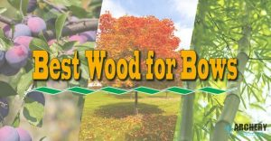 Best Wood for Bows
