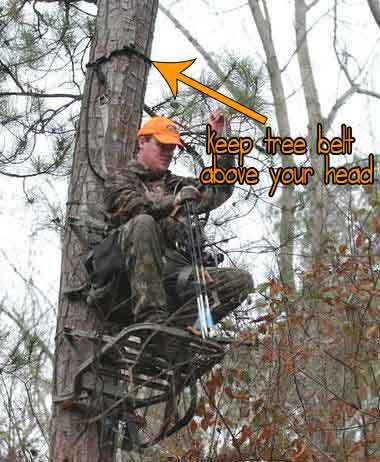 keep your tree belt above your head