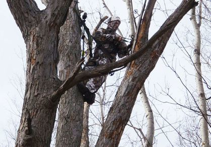 Tree Saddle hunting