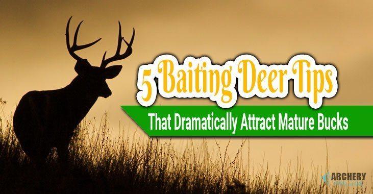 deer baiting tips