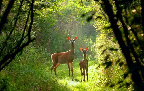 deer baiting tips - deer trail