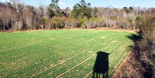 deer baiting tips - food plot