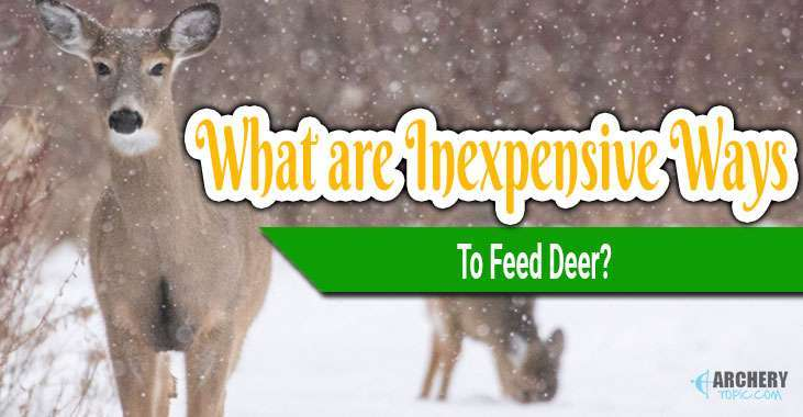 inexpensive way to feed deer
