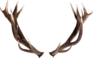 What is Shed Antler Hunting