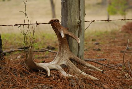 deer antler fence crossing