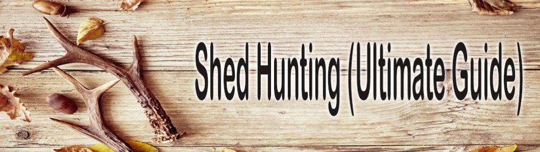 Shed Hunting (Ultimate Guide)