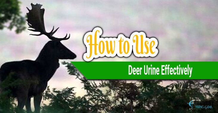 'how to use deer urine effectively