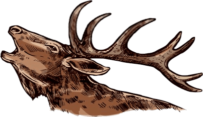what is elk hunting?