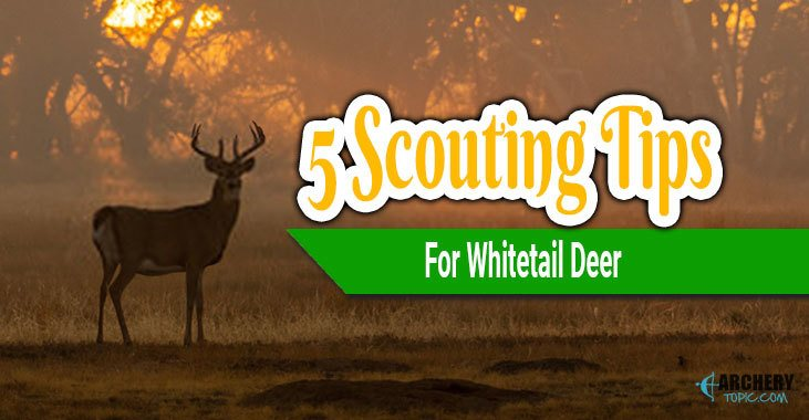 5 Scouting Tips for Whitetail Deer