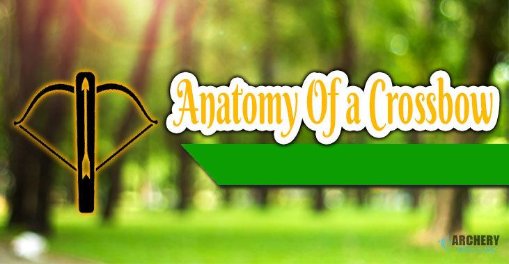 Anatomy Of a Crossbow