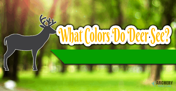 what color do deer see