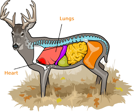 deer heart and lungs