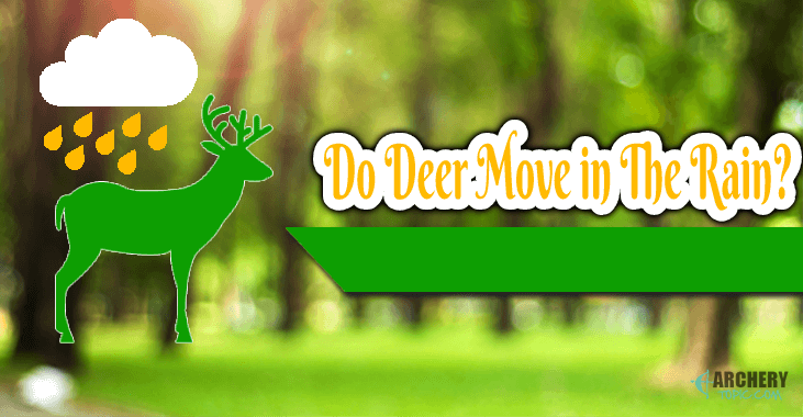 do deer move in the rain
