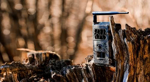 4. Set Up Trail Cams