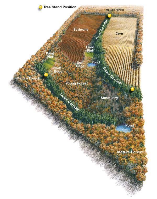 Soil and Surrounding Vegetation