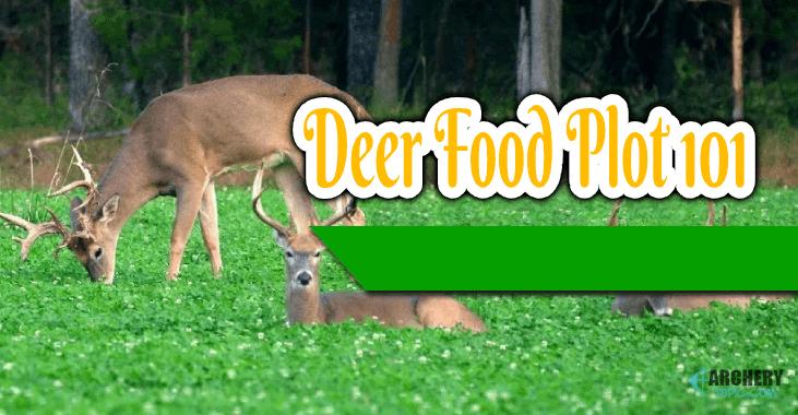 deer food plot 101