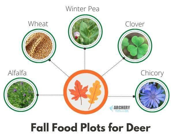 fall deer food plot