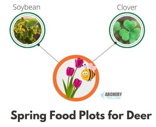 spring deer food plot